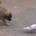 Pups meet pigeon
