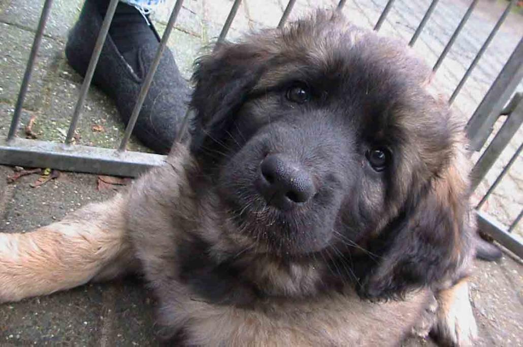 Mazz, 7 weken oud, 05-12-2003