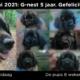 G-nest 5 jaar oud